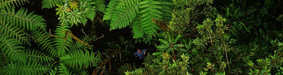 Bosque-de-helechos-y-Daniel - Foto Daniel Huamán