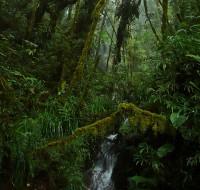 Naciente del río Tocoroyoc en Wayqecha - foto por Daniel Huamán