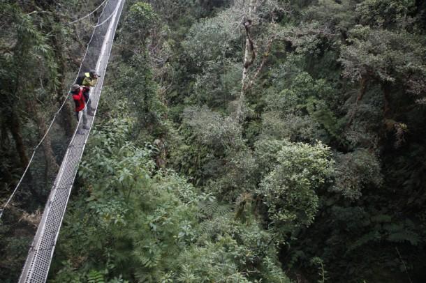 canopy walkway - Wayqecha