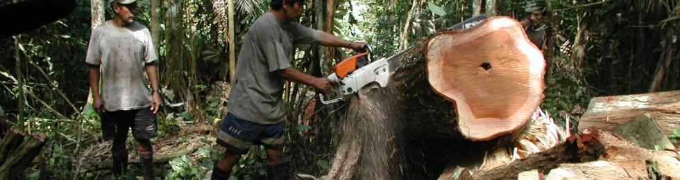 Logging by Mathias Tobler