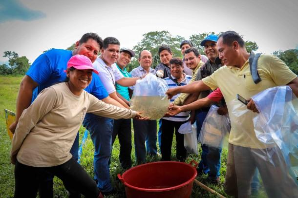 60 MIL ALEVINOS SON ENTREGADOS POR CONSERVACION AMAZONICA ACCA PARA MEJORAR ECONOMÍAS LOCALES Y CUIDAR EL ECOSISTEMA