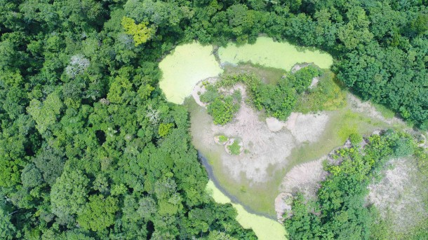 Vista de bosque amazónico desde dron.